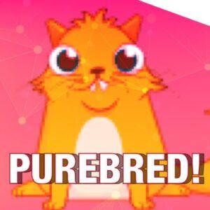 Buy Purebred WikiLeaks Crypto Kitties! 🙀 (Oh and a MASSIVE 40% Bitcoin 📉 Market Crash)